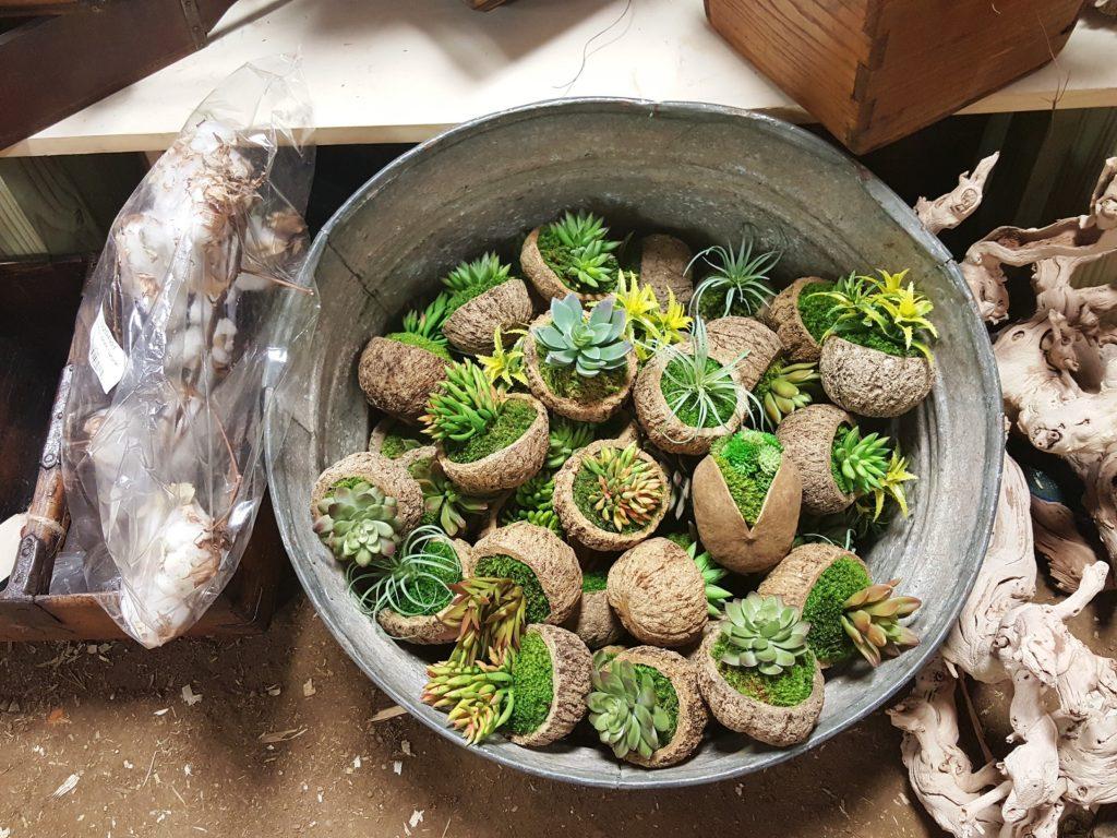 vintage market days - succulents
